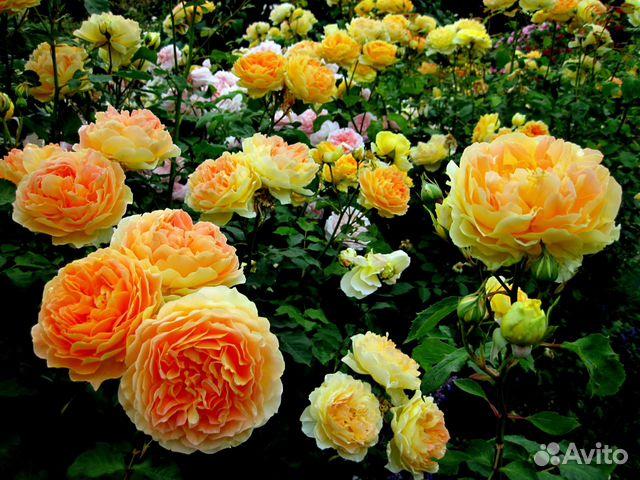Сады сибири фото