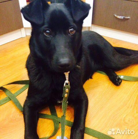 Отдадим в хорошие руки щенка таксы-кобель,6 месяцев