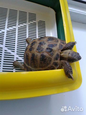 купить черепаху в витебске пациенты