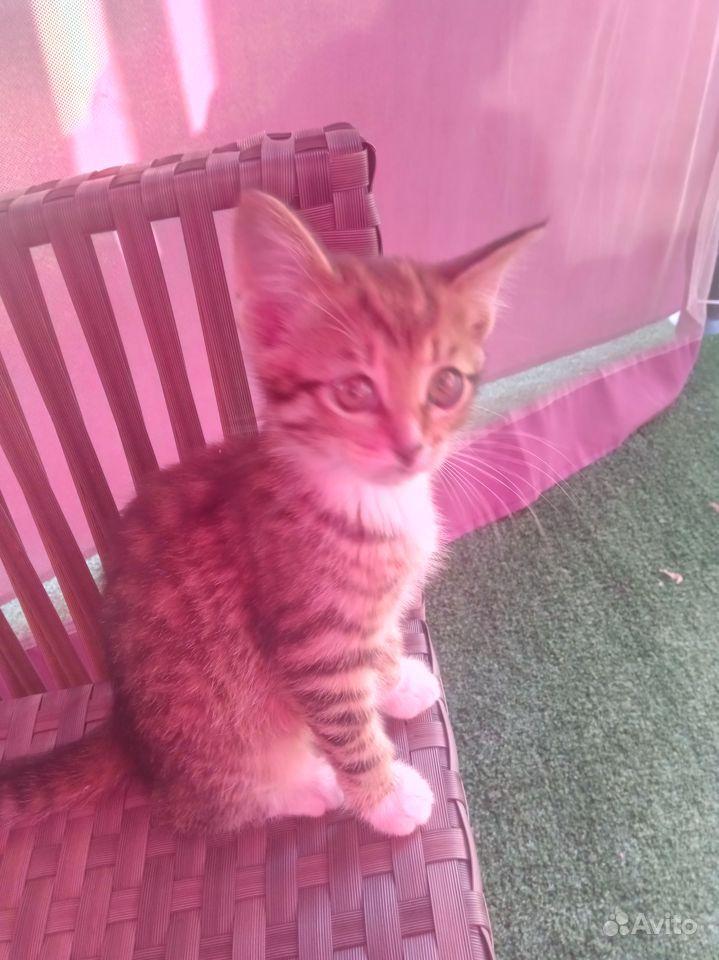 Отдаю котят в дар в Чехове - фотография № 1