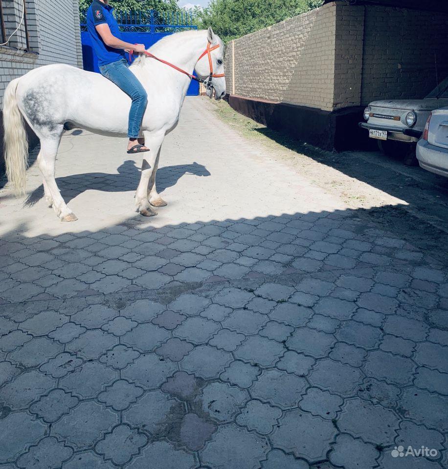 Лошадь 200т