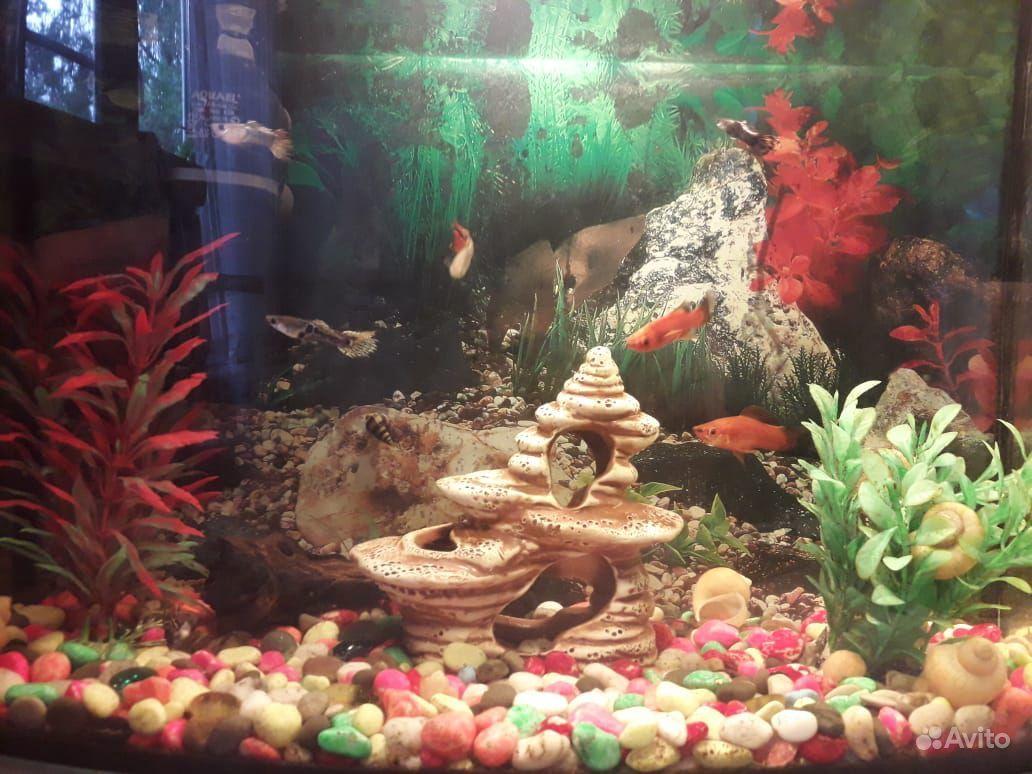 Аквариум с рыбками 25 литрой купить на Зозу.ру - фотография № 3