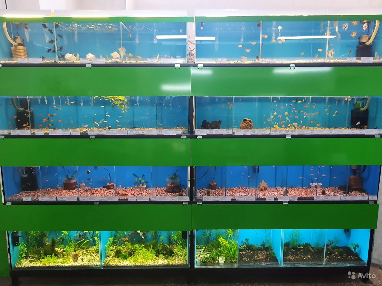 Аквариумные рыбки купить на Зозу.ру - фотография № 1
