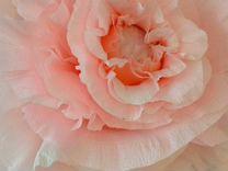 Переделкино ближнее купить цветы, доставка цветов и доставка букетов в павлодар павлодар