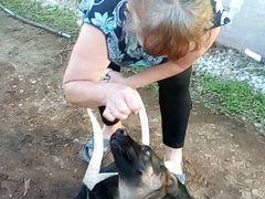 Немецкая овчарка, 5 месяцев, девочка