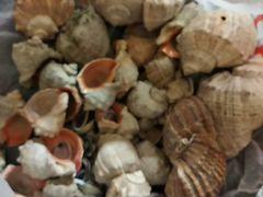 Ракушки морские для аквариума