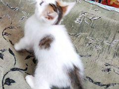 Хорошенький котёночек (мальчик) в заботливые руки