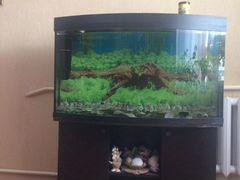 Продаётся аквариум на 380 литров вместе с тумбой