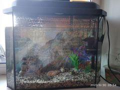 Аквариум с рыбками. Грунт, украшения, воздух, филь