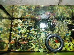 Аквариум 30л с рыбками
