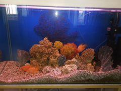 Аквариум с натуральными кораллами 540 литров