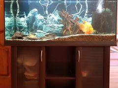 Аквариум 220 л с рыбками