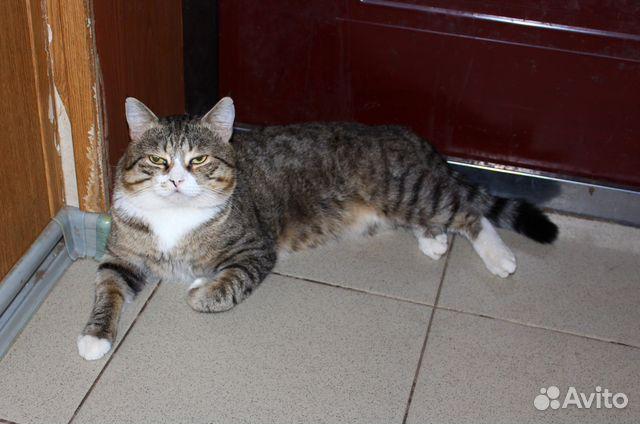 Фото кота в душі — 4