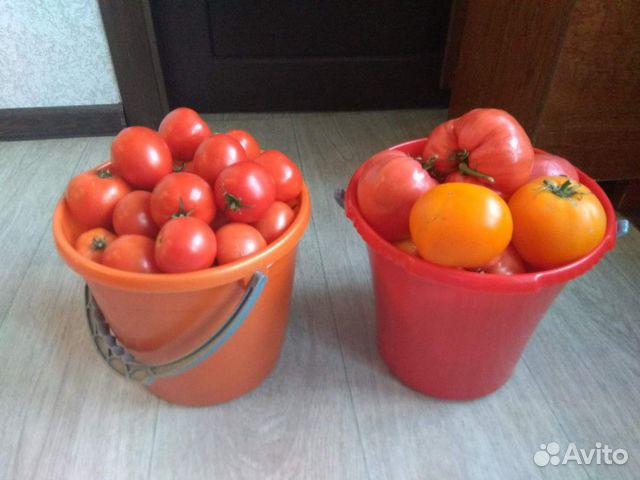 Ведро помидор картинка