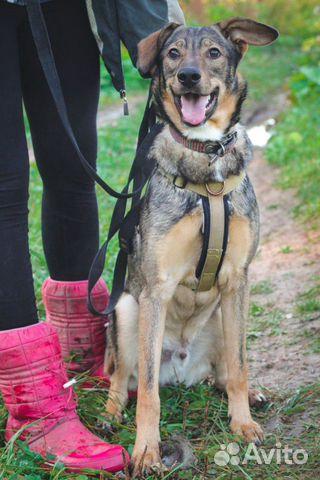 Собака ищет дом купить на Зозу.ру - фотография № 7