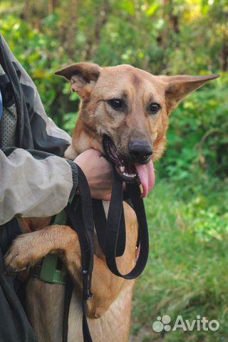 Собака ищет дом купить на Зозу.ру - фотография № 6