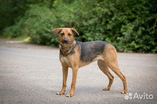 Ирма - добрая собака в добрые ручки купить на Зозу.ру - фотография № 3