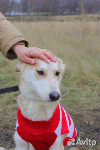 Милашка Собака подросток Эви в дар купить на Зозу.ру - фотография № 6