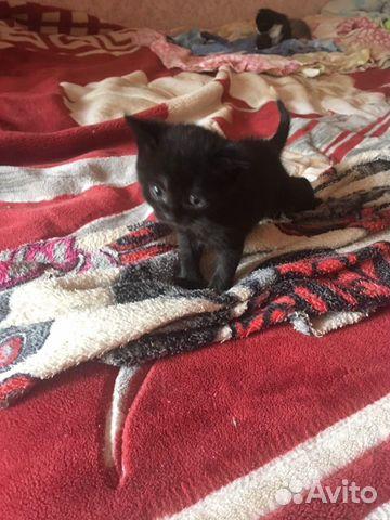 Отдам котят 89511573969 купить 2