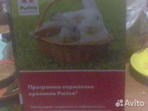 Hühner Broiler 89875253183 kaufen 2