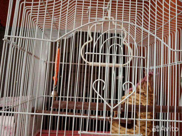 Продам 2 самок попугаев с клеткой, гнездом, кормом