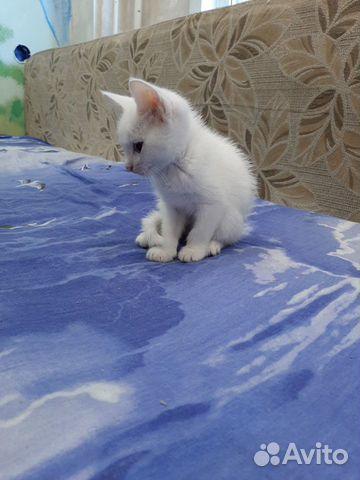 Отдам котенка в хорошие руки бесплатно  89246079648 купить 2