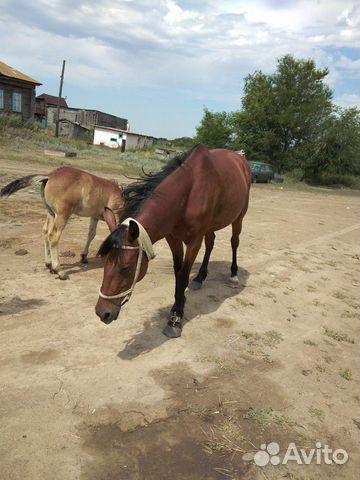 Лошадь с жеребенком  89053862728 купить 5