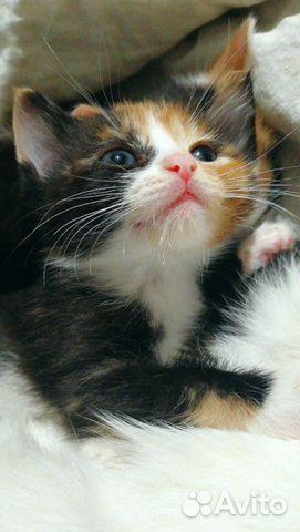 Котята на любой вкус  89879907788 купить 5
