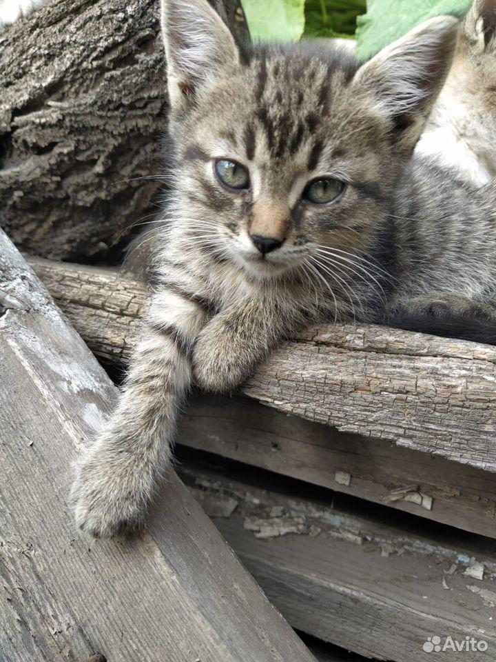 Отдам котят в добрые руки  89096353184 купить 4