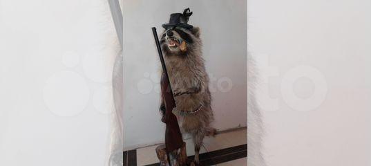 3d78a5f6ed42c Продаю чучела диких животных купить в Краснодарском крае на Avito —  Объявления на сайте Авито