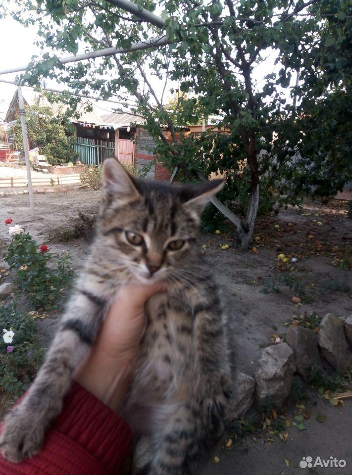 Кошка  89370906262 купить 1