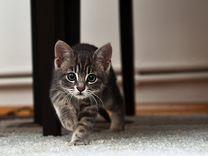 Спасенные в Пасху котятки