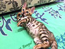 Бенгальские ручные котята с док-ми