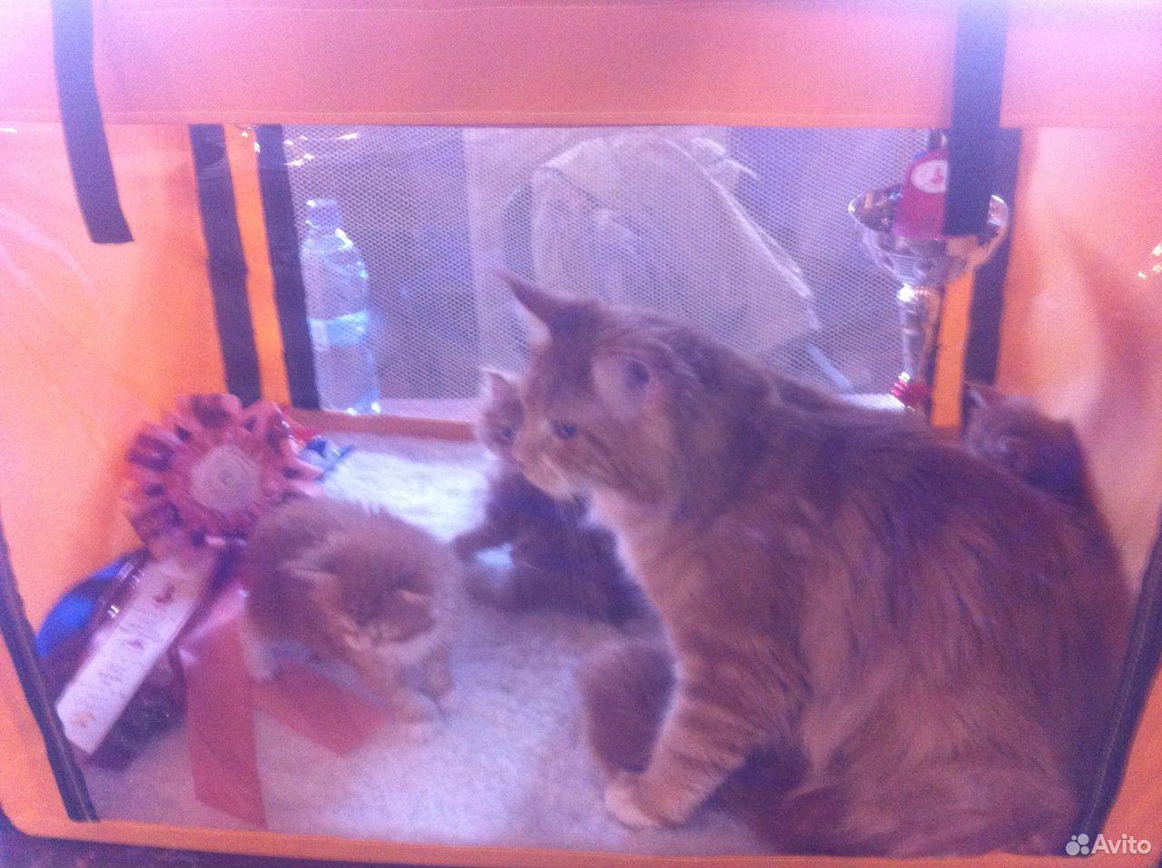 Выставочная палатка для кошек  89610844416 купить 1