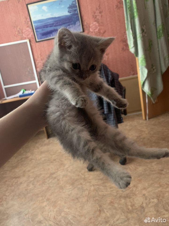 Кошка  89178177369 купить 3
