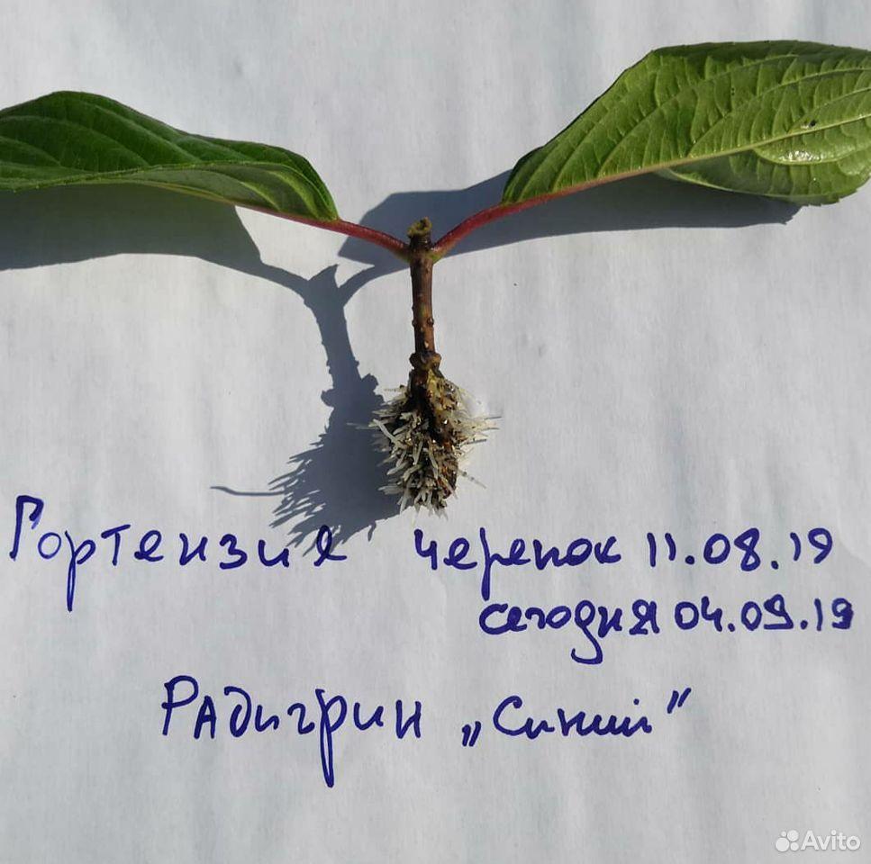 Радигрин для черенкования растений  89029239959 купить 4
