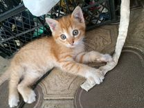 Кошечка, 2 месяца