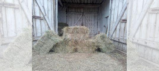 Сено в тюках луговое и посевное (клевер,люцерна) купить в Калужской области | Животные и зоотовары | Авито
