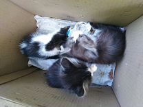 Котята 2 мальчика и девочка
